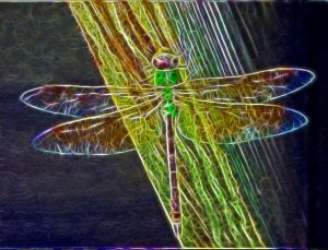 8-dragonfly